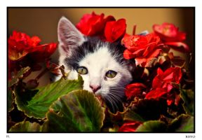 Cat and Roses by Riffo