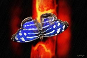 Papillon en blue sur orange by hyneige