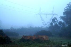 Foggy Ravine power line by Zlata-Petal