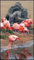 Arizona 2011 - Flamingoes by DarlingMionette