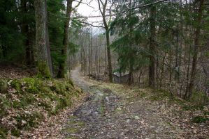 Forest Road III - Stock Photo by KarvinenStock