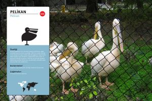 Pelican Pictogram - Sign by n