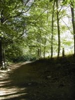 Street in the Forest 3 by Ivette-Stock