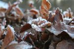 Frosty Leafs by Harleyasv