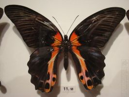 butterfly 9 by kayne-stock