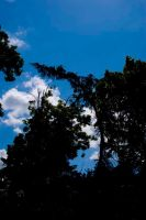 Trees and sky. by ThePoet-D80