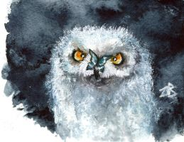 angry owl by zarielcharoitite