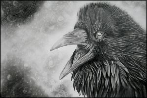 Evil Raven by crunchwing