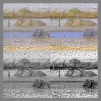Elephant Collage Etosha by Jenvanw