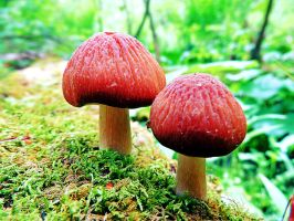 Swamp Trail Mushrooms 02 by TemariAtaje