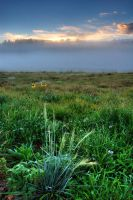 Misty Morning Meadow by EvaMcDermott
