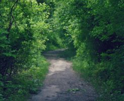 The Road Less Traveled by vi0letdreamer