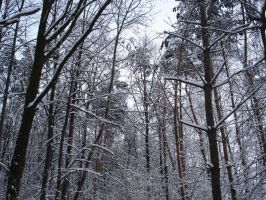 Trees and snow by Lukotus