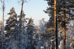 Winter landscapes by BIREL
