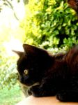 My little black cat_ by abs22