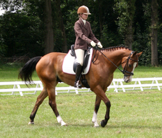 Dressage stock 20 by ByMelody