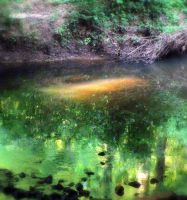 The Emerald Pool by StaceyCanis