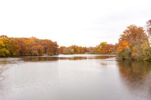 Autumn Leaves on the Lake by elvaniel