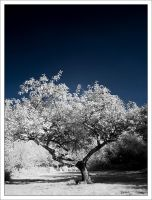 IR apple tree by neoloonatic