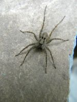 Spider on Slate by D905