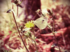 The Last of Summer by sublimelove4life
