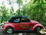 Think green beetle by kevinsallee