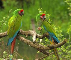 Colorful Macaws by MDGallery