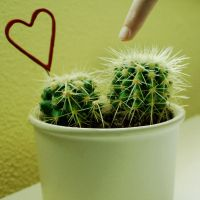 Caution prickly by Elasias