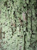 Tree Bark 2 by Salamander-Stock