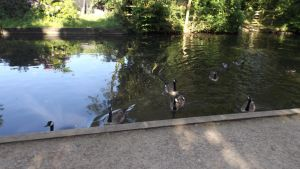 Quackers and Honkers by Dan-S-T