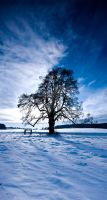 Tree by Eik84