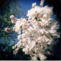 Summer Blooms by Lomo440