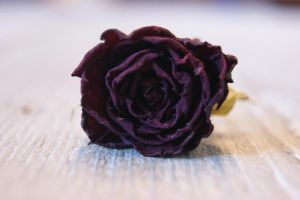 Dried Rose by IbolyaColorHead