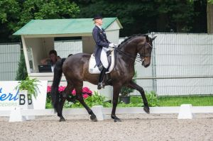 Dressage Stock - VIII by Summerly