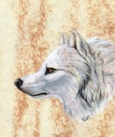 White Wolf by WindWo1f