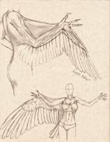 Anthro Avian Arm/Wing Comparative Anatomy Study by RussellTuller