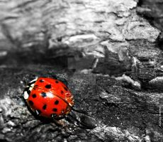 The Lady Bug by ashleysmithphoto