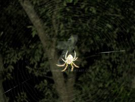 Spider 1 by geshorty34