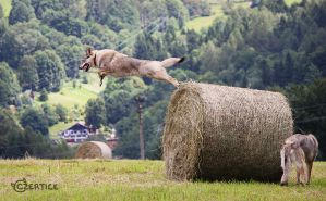 Wolfdogs Can Fly XVI. by Czertice