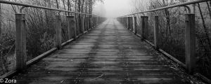 The Dark Bridge by stengchen