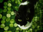 Kitty in fields of green by MetalFaie