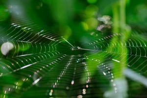 Spiderweb by Artwork-Production