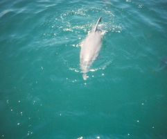 Dolphin 2 by kbstock