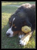 The favourite game of my dog by katttinka