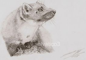 a little marten by selvatico3