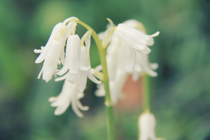 White Bells by MartyPunk13