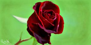 Red rose by Wizardik