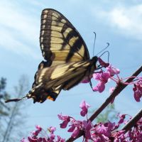 Butterfly 2 by EverydayStock