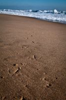 Tracks in the Sand by 05Rex