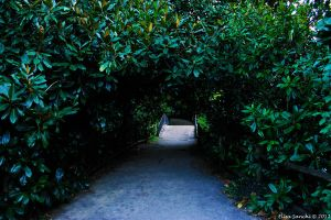 A way through the leaves by Cadaverino89